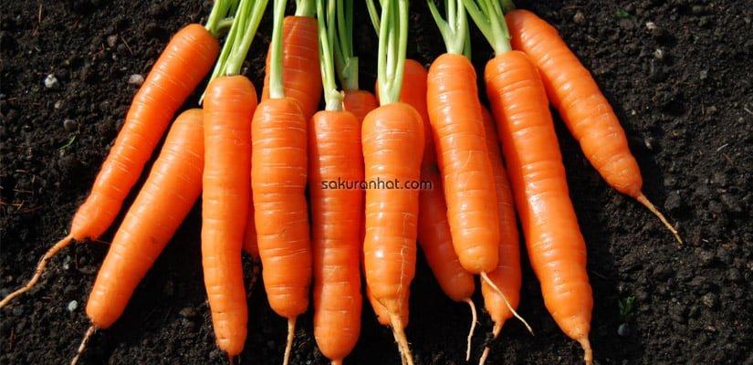 Trị thâm quầng mắt bằng cà rốt